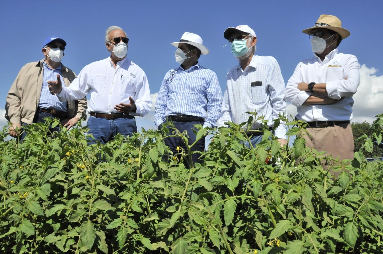 El Gobierno, a través de Agricultura, auxiliará productores de tomate