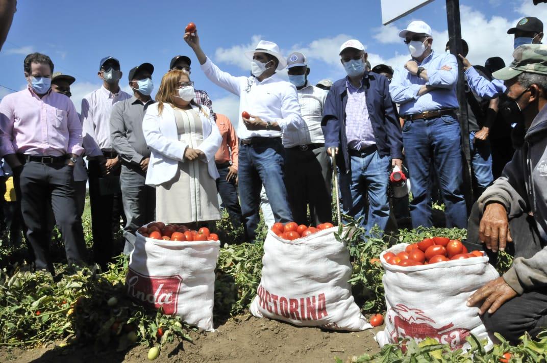 Gobierno sembrará 300 mil tareas de maíz y sorgo en la región Sur