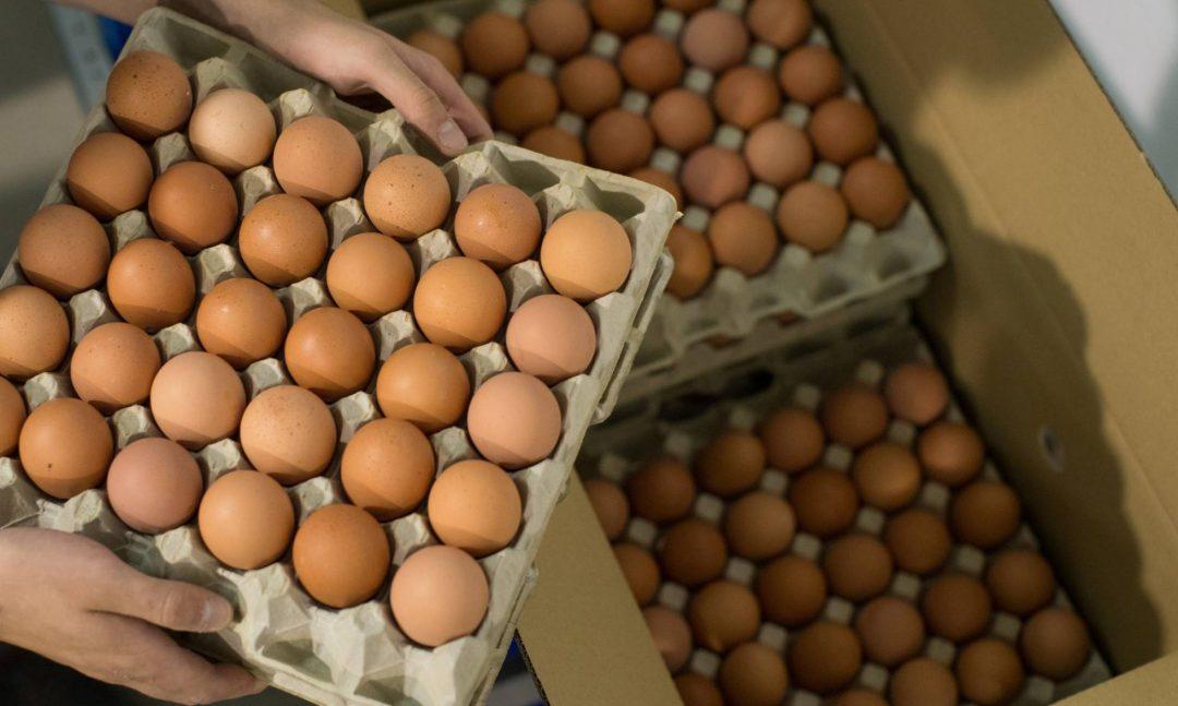 Agricultura intervendrá en precios del huevo